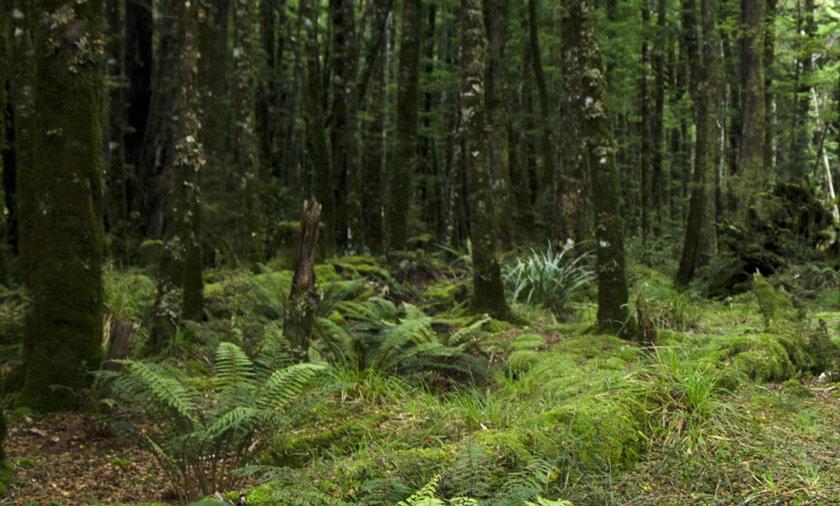 Niecodzienne znalezisko we Włoskim lesie
