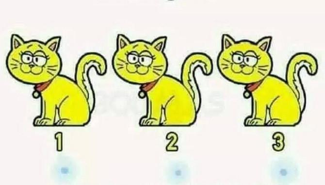 Da li vidite koja se mačka razlikuje?