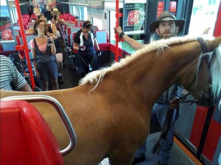 Niezwykły pasażer w pociągu. To zdjęcie robi w sieci prawdziwą furorę