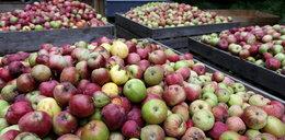 Sadownicy nie będą dostarczać jabłek?!