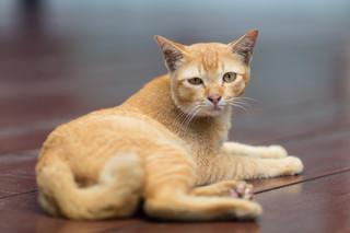 Koty w zimie same mogą sobie nie poradzić. Czy spółdzielnie muszą im pomagać?