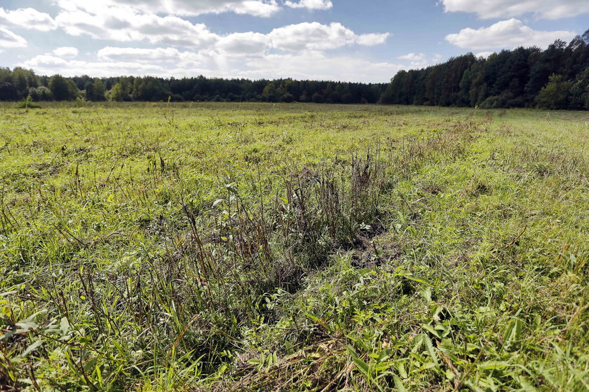 13 hektarów plonów poszło na marne