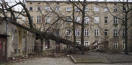 Powalone drzewo przy ul. Rewolucji 1905 r. Służby znalazły właściciela