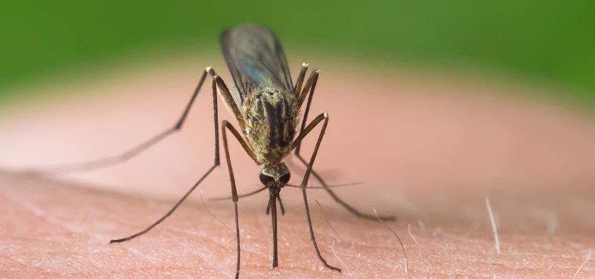 Gdy swędzi i piecze. Czym smarować skórę po ukąszeniach os, a czym bąble po komarach?