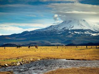 Horses on field by snowcapped mountain against sky