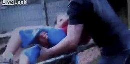 Tygrys zaatakował chłopca w zoo