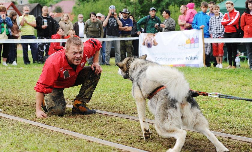 Zawody psów w Chorzowie