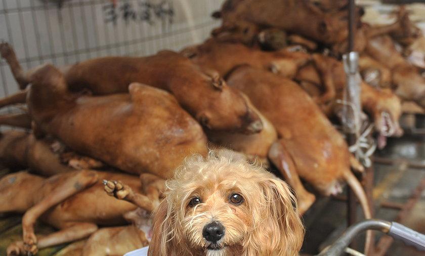 jedzenie psów
