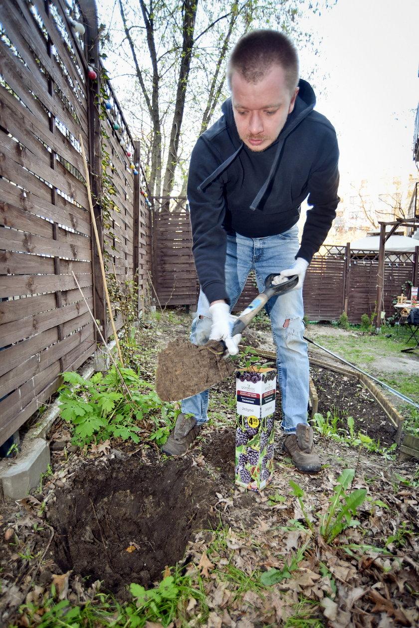 Jak posadzić sadzonkę w ogródku