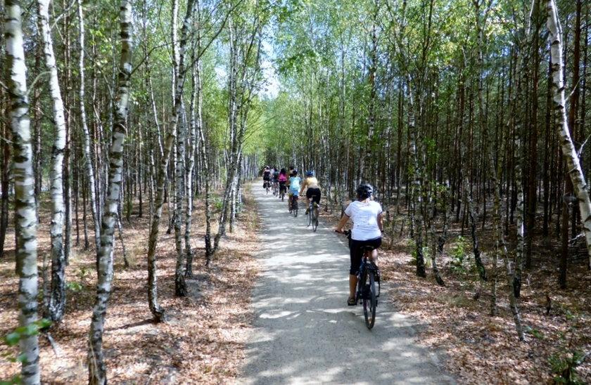 Rowery w lesie