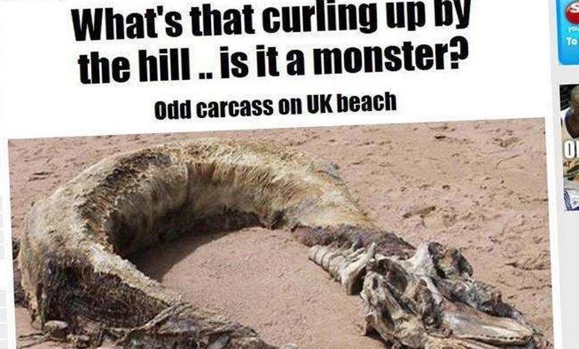 Na plażę wyrzuciło cielsko potwora?!