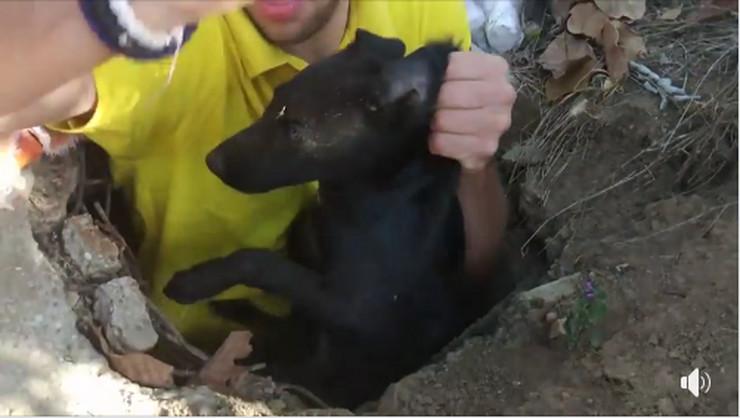 ARS, Animal Rescue Serbia, spasavanje psa iz šahta