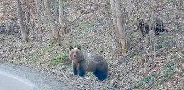 Leśnik uciekał przed niedźwiedziem. Nagrał to kamerą