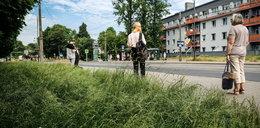 Miasto zapomniało o koszeniu trawy?