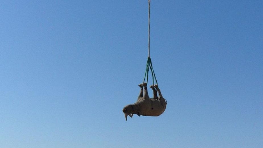 Transport nosorożca śmigłowcem, fot. Namibian Ministry of Environment