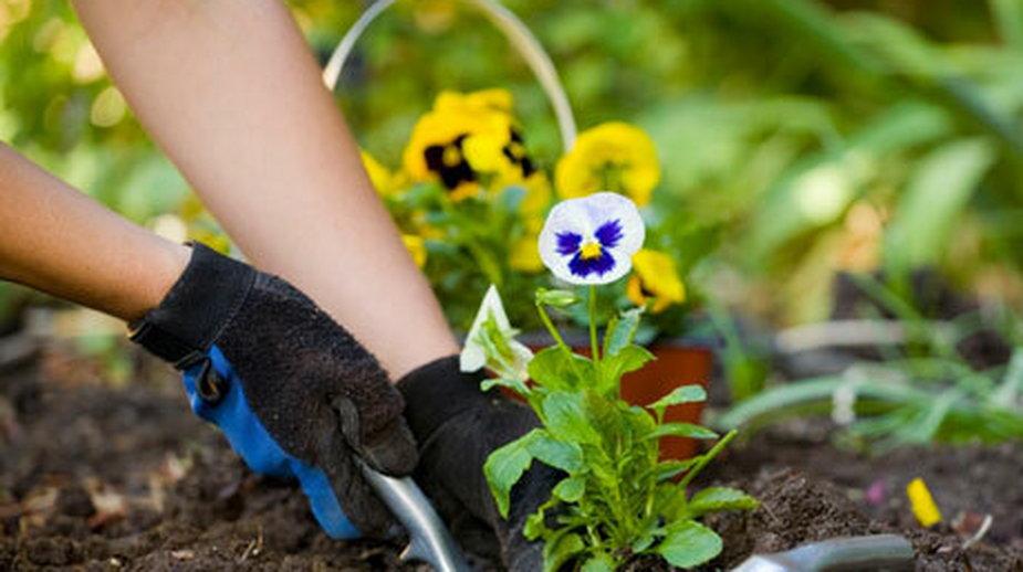 Ogród w maju – jak dbać, pielęgnować i co sadzić?