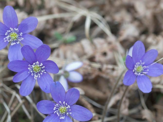 """Ovo su najpoznatija verovanja vezana april: """"Što je april tiši i lepši, to je maj ljući i besniji"""""""