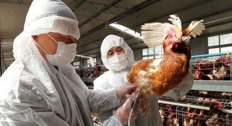 Bird Flu quarantine