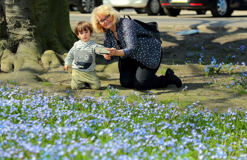 Wiosna w Łodzi. Park Klepacza zasypany kwiatami