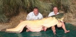 Złowił gigantycznego suma albinosa. Omal nie zginął