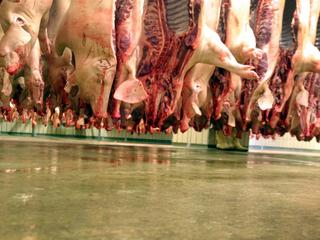 Record Number of 59 Million Pigs slaughtered