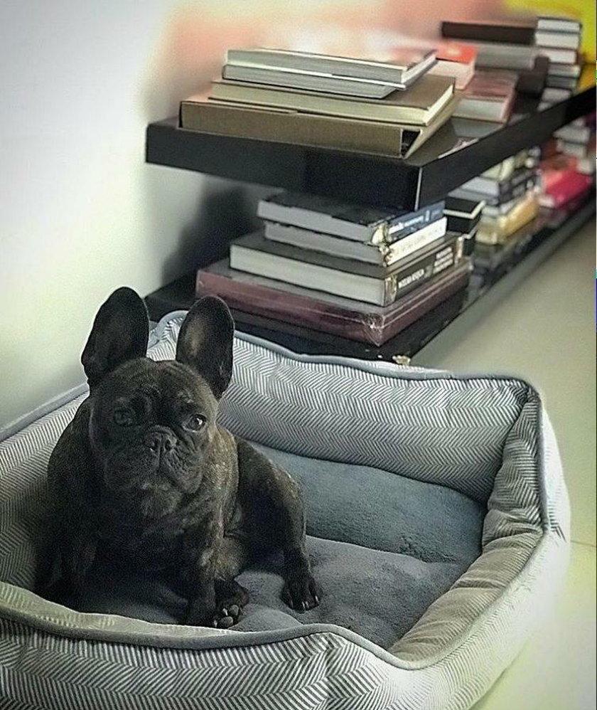Pies Małgorzaty Rozenek