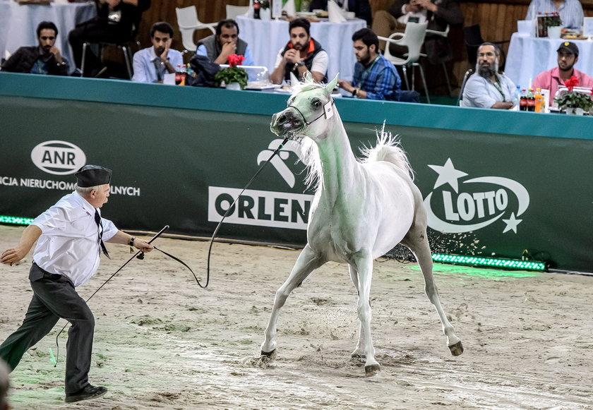 CBA sprawdza aukcję koni w Janowie Podlaskim