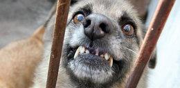 Pies rzucił się na 3-latkę w Mławie. Dziewczynka trafiła do szpitala
