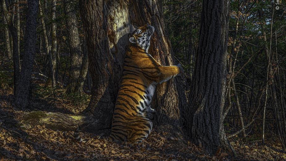 Zwycięzcy Wildlife Photographer of the Year 2020