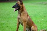 Policijski pas