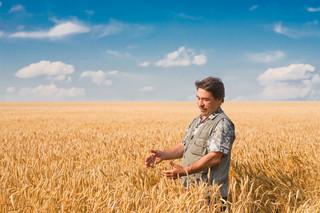 Susza niszczy uprawy polskich rolników. Sawicki: Liczymy straty