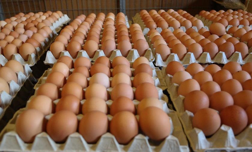 Obecna w jajach Salmonella to jedna z głównych przyczyn zatruć pokarmowych