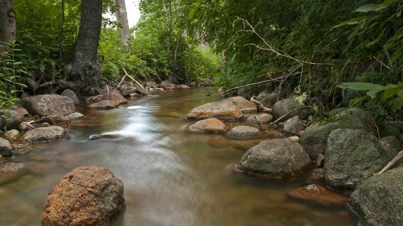 Czarna Hańcza w Suwalskim Parku Krajobrazowym