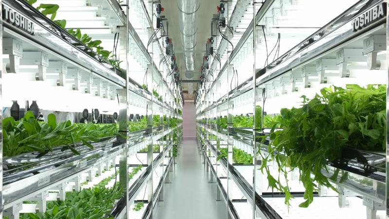 Farma Toshiby