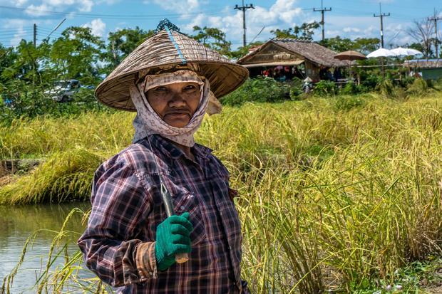 Na polu ryżowym w Chantaburi