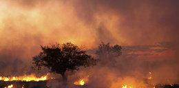 Płonie Syberia. Ogień pochłonął już obszar wielkości Belgii