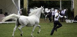 Polityczna wojna na konie?