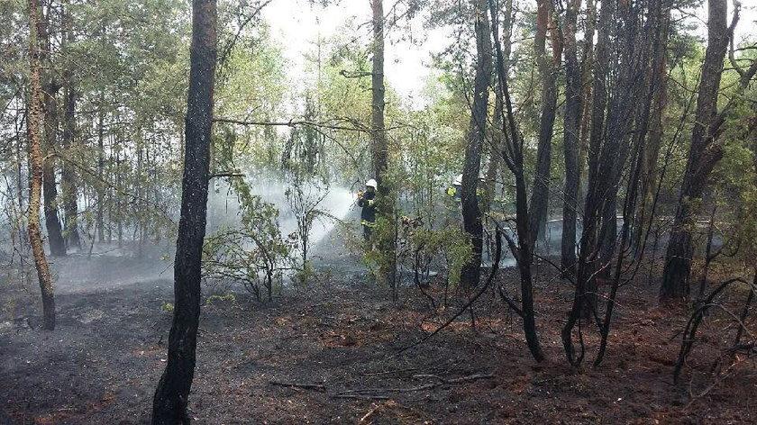 Pożar lasu pod Piotrkowem Trybunalskim. Dromader i straż pożarna w akcji