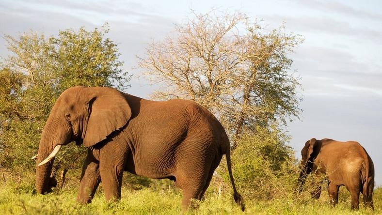Wybrali się na safari, zatrzymali ich za zamach stanu