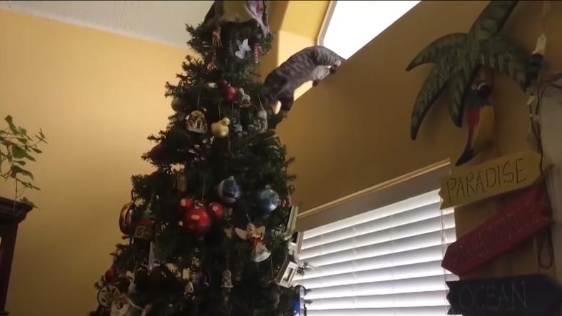 Macskák, akik nem tudnak ellenállni a karácsonyfának / Fotó: YouTube