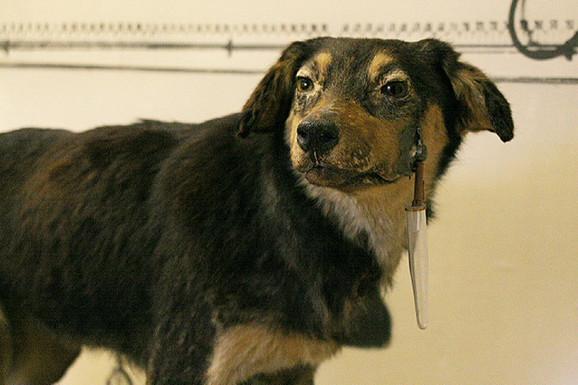 Eksperimenti sa psima trajali do opsade Lenjingrada u Drugom svetskom ratu