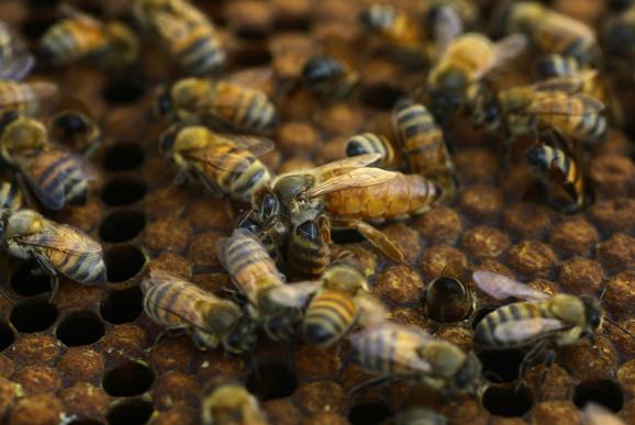 Резултат слика за Ulazak Srbije u EU otvara tržište pčelarima