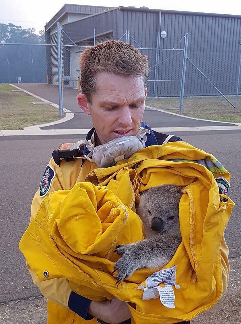 Strażacy walczą z pożarem, ratują też zwierzęta