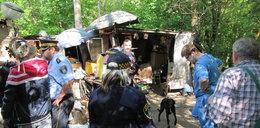 Zaszczepili psy bezdomnych