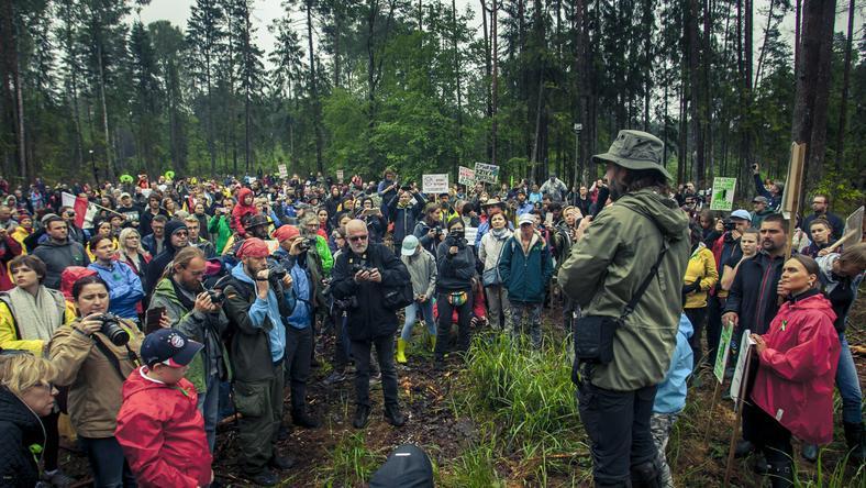 Tłumy podczas spaceru obywatelskiego w Puszczy Białowieskiej