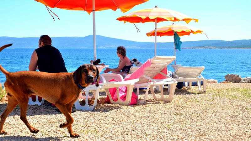 Plaża dla psów w Crikvenicy