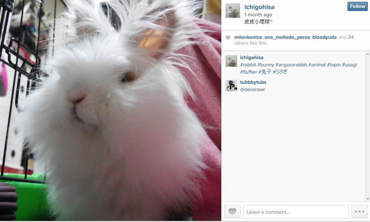 598499_zeka-instagram