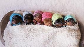 Ile średnio trwa ciąża u ssaków? Sprawdź swoją wiedzę! [QUIZ]