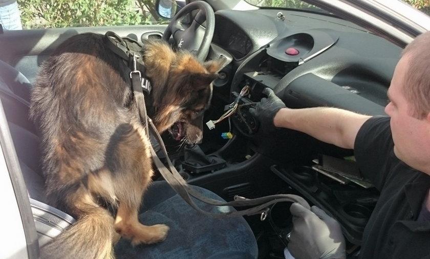 Policyjny pies wytropił marihuanę