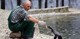 Ile zjada pingwin?
